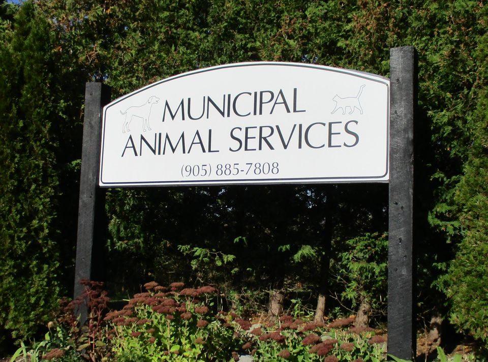 Municipal Animal Services, formerly Shelter of Hope. Port Hope, Cobourg, Hamilton Township,